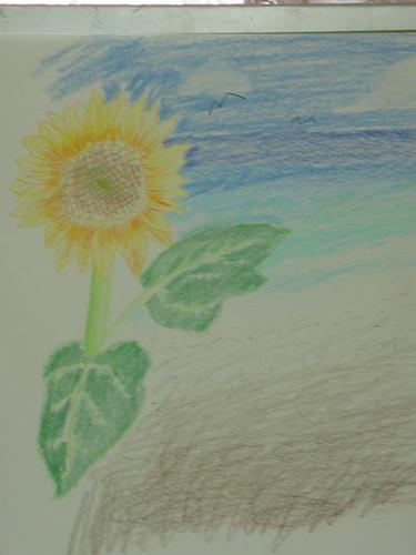 向日葵と、浜辺